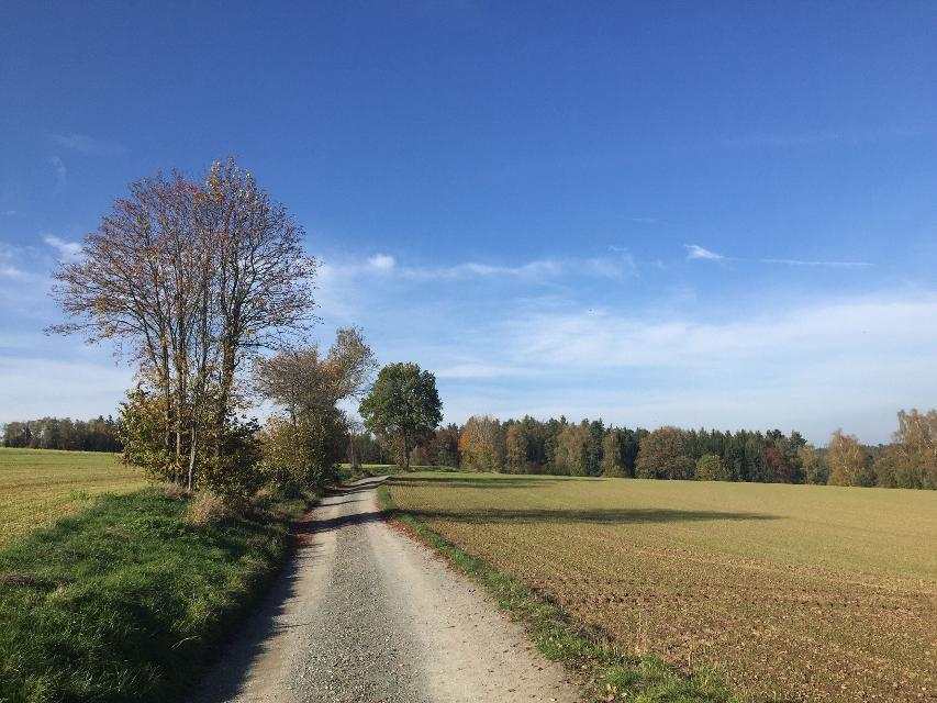 Feldweg bei Tennach