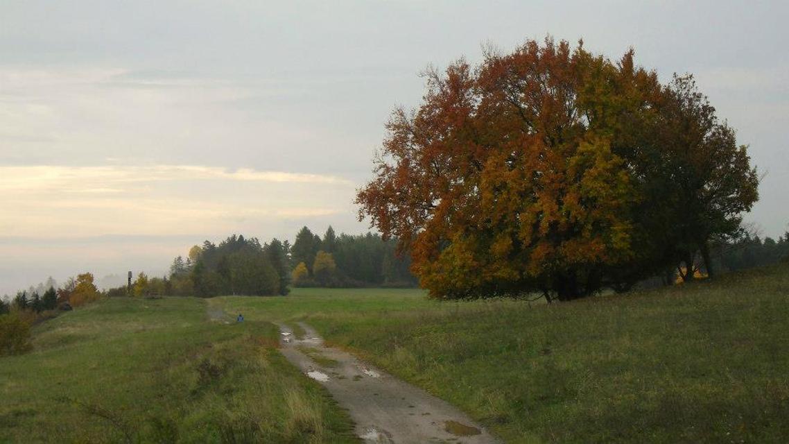Herbst am Görauer Anger