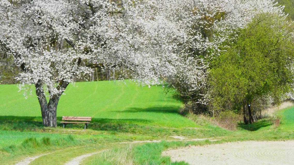 Frühling in Stadtsteinach