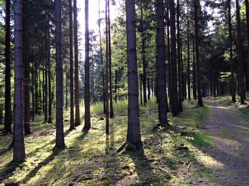 Im Kriegswald