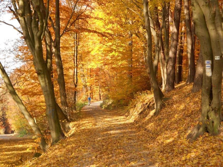 Buchwald hinter der Plassenburg im Herbst