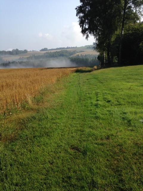 Wiesenweg Richtung Eisenbühl