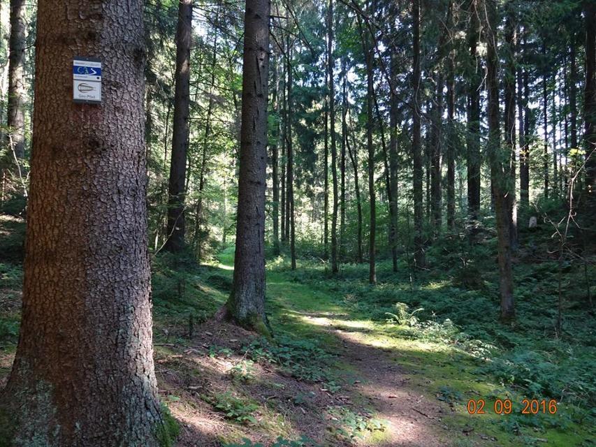 Im Kohlenwald