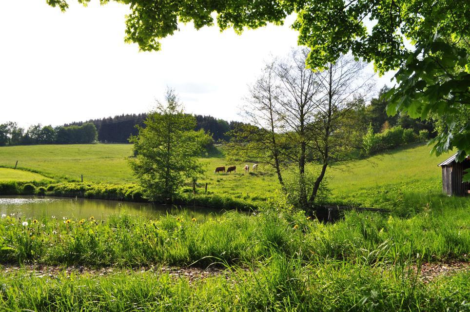 Teich bei Schönwald