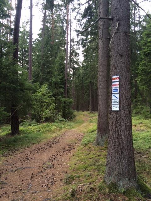 Schöner Waldpfad Richtung Pechreuth
