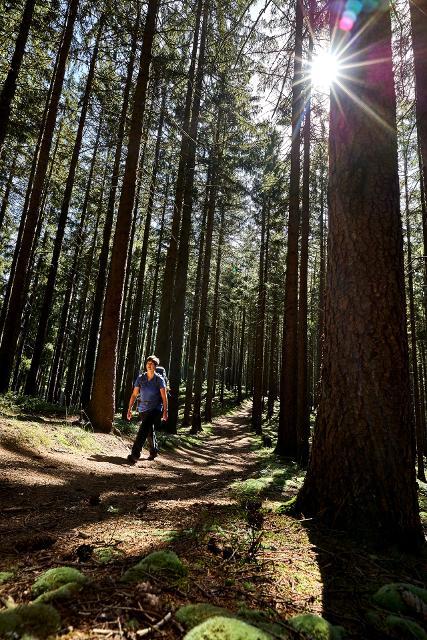 Wald-Wander-Vergnügen