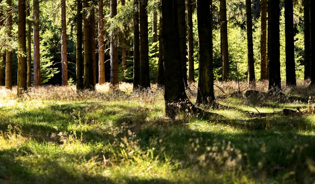 Waldbaden im Frankenwald