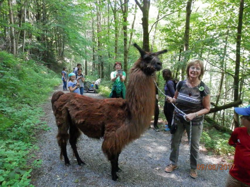 Kulturelle Wanderung für Familien im Steinachtal