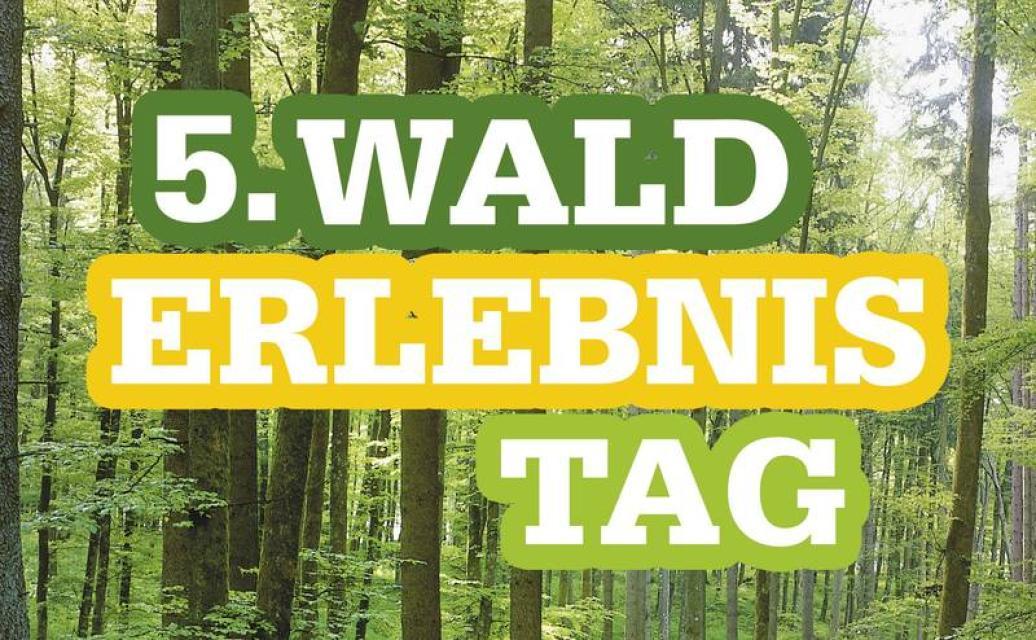 5. Walderlebnistag in Stadtsteinach
