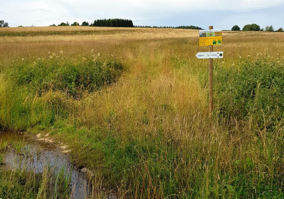 Der Naturweg in der Teuschnitz-Aue