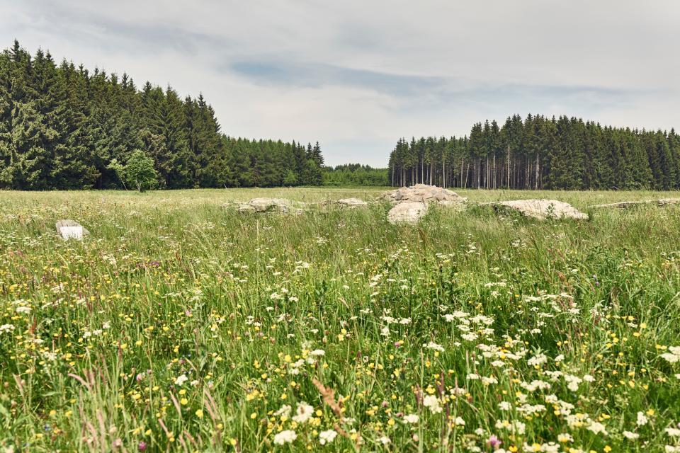 Wanderung auf dem FrankenwaldSteigla Arnikaweg