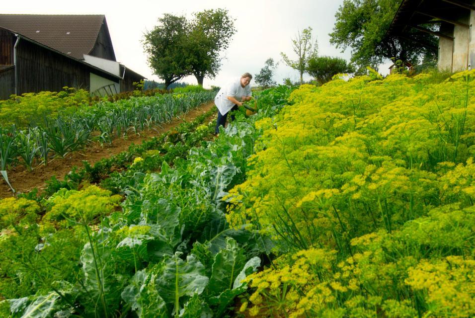 Saatgut aus dem eigenen Garten