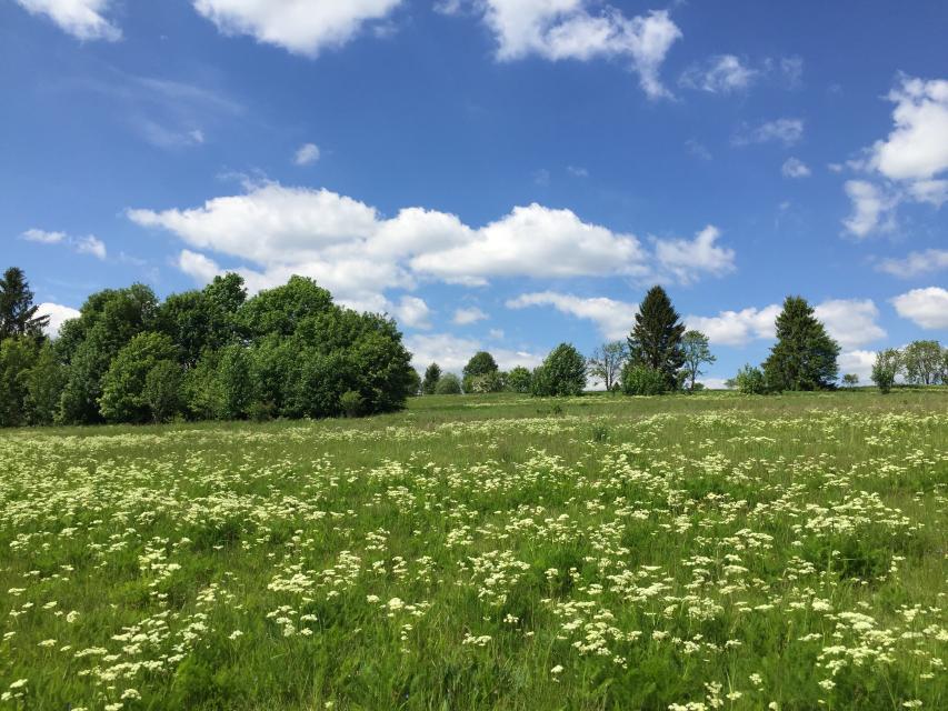 Bärwurz, Borstgras und Blutwurz - Pflanzenvielfalt am Wiesen-Panorama-Weg