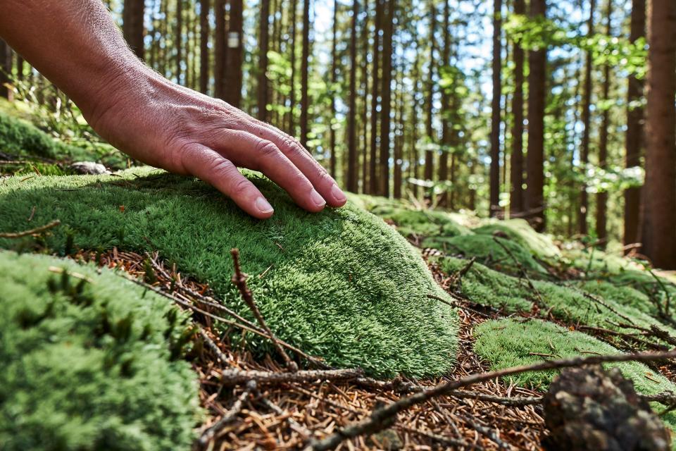 Die heilsame Kraft des Frankenwaldes - Walkshop