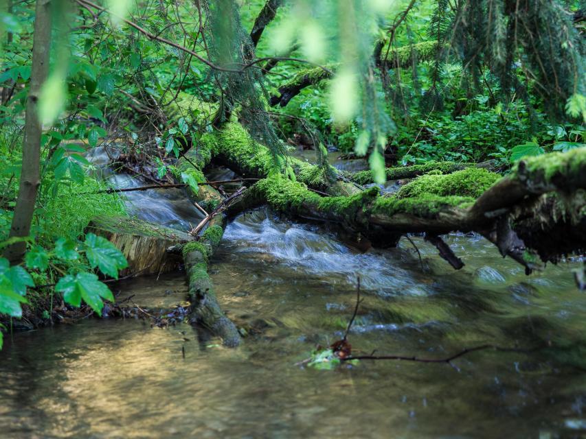 Mühlbergwanderung: Amphibienwanderung in der Langenau