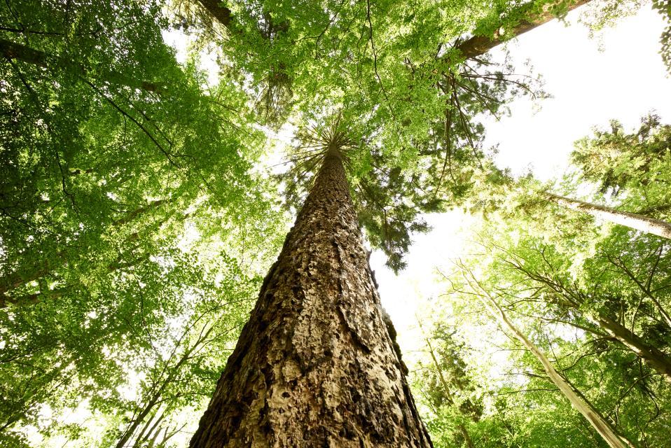 Die Seele der Bäume - Walkshop