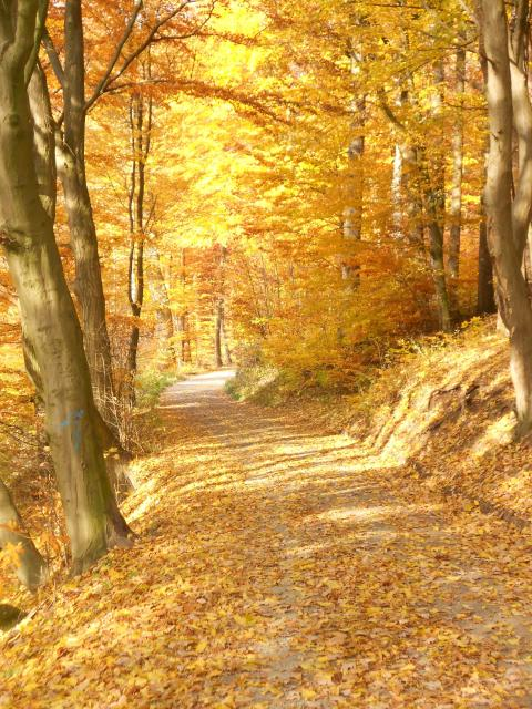 FrankenwaldSteigla Ebersbacher Weg