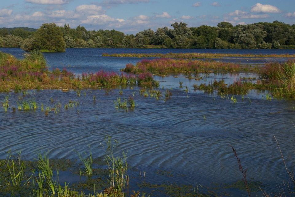 Flachwasserzone Knetzgau