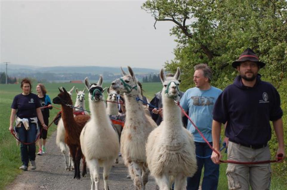 Wandern mit Lamas in den Haßbergen