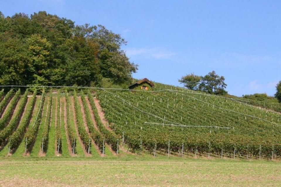Weinberge Weinbau Weyrauther