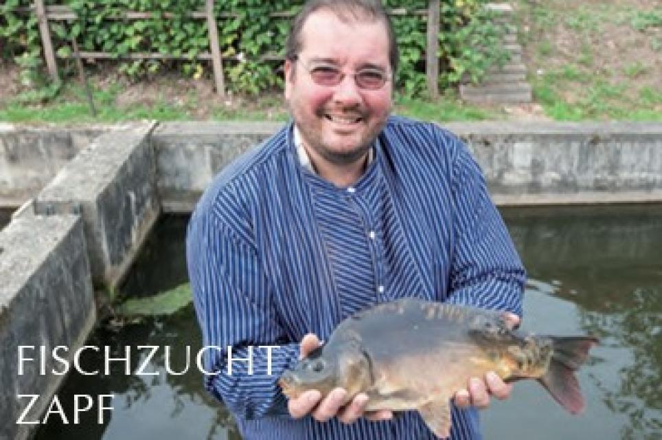 Frischer Fisch aus der Fischzucht Zapf