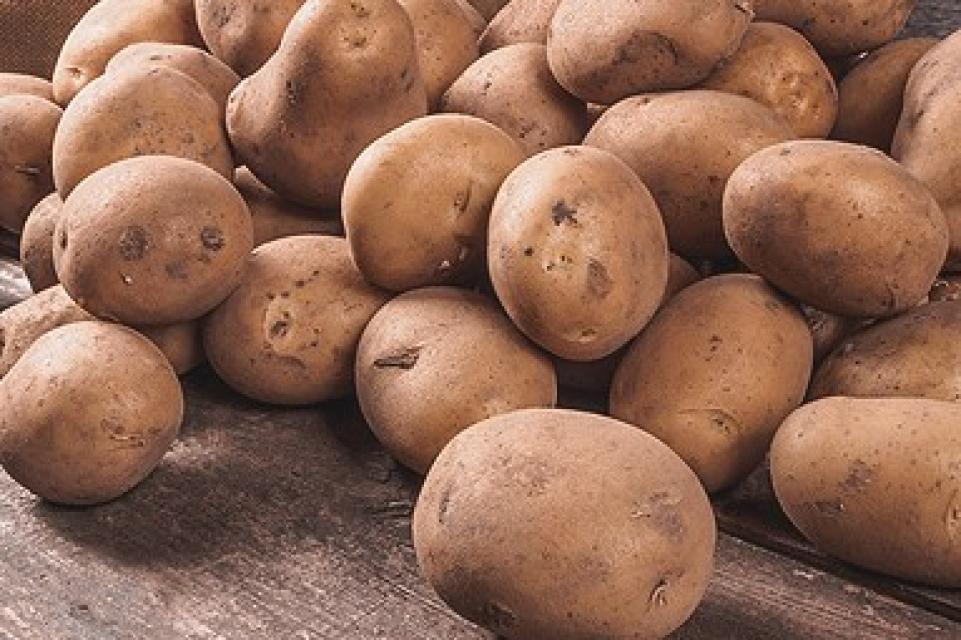 Beste Kartoffeln vom Biohof