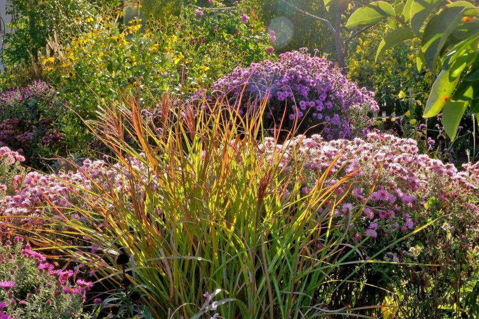 Gartenparadies von Schneider/Pecoraro-Schneider