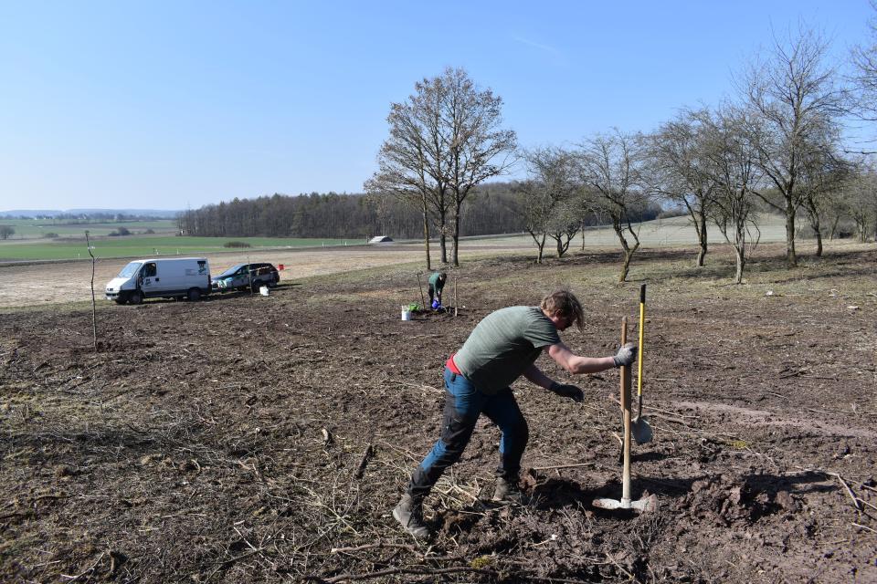 Geschäftsführer und Mitarbeiter pflanzten verschiedene Obstbäume auf eine entbuschte Fläche bei Ostheim.