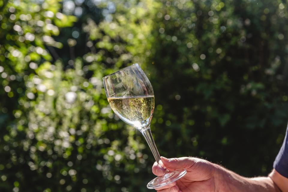 Wein Abt-Degen-Weintal
