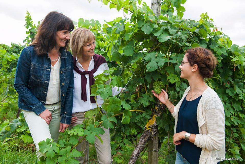 Kulinarische Weinprobe mit Weinbergführung