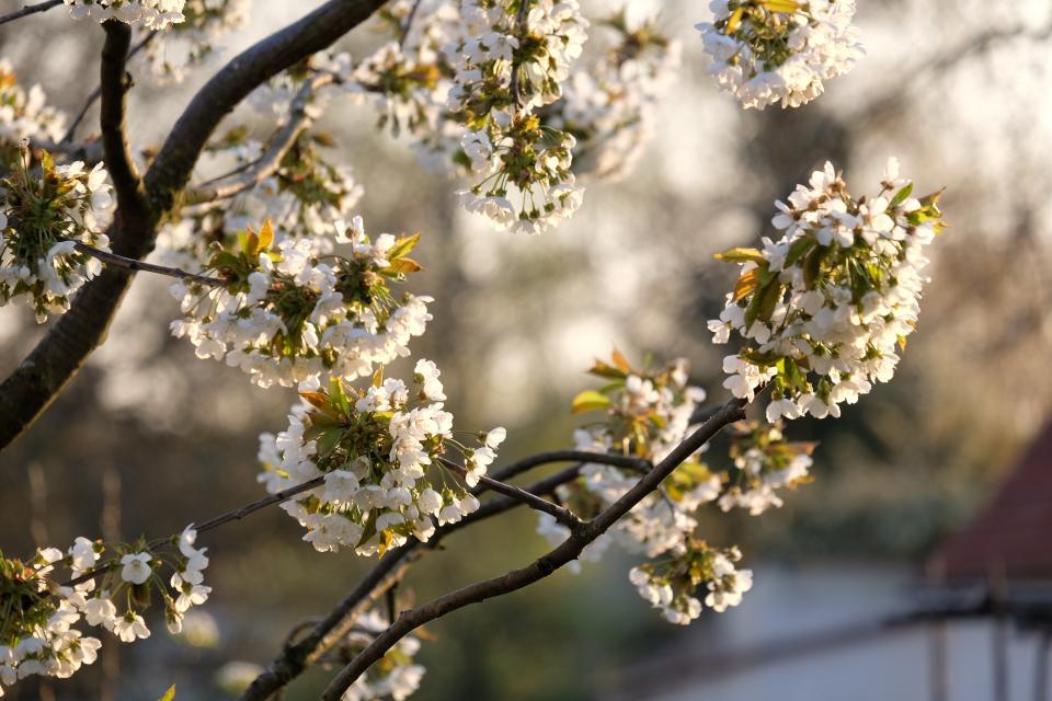 Gartenparadiese: Der Frühlingsgarten