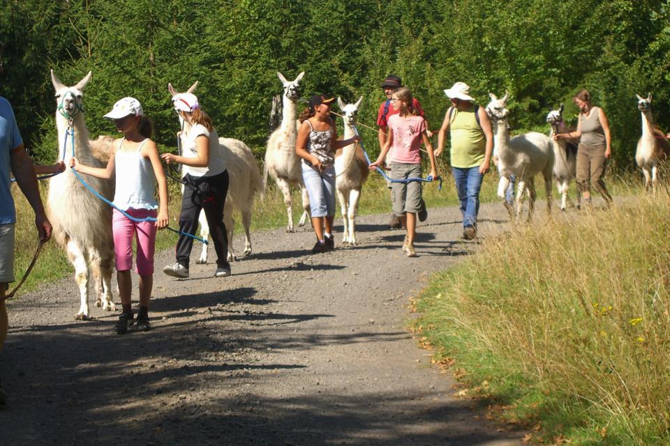 Rhöngblick-Tour mit Lamas
