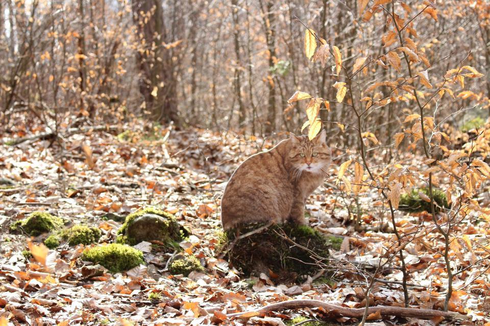 Feli, die kleine Wildkatze