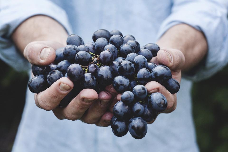 Kellerführung mit Weinprobe