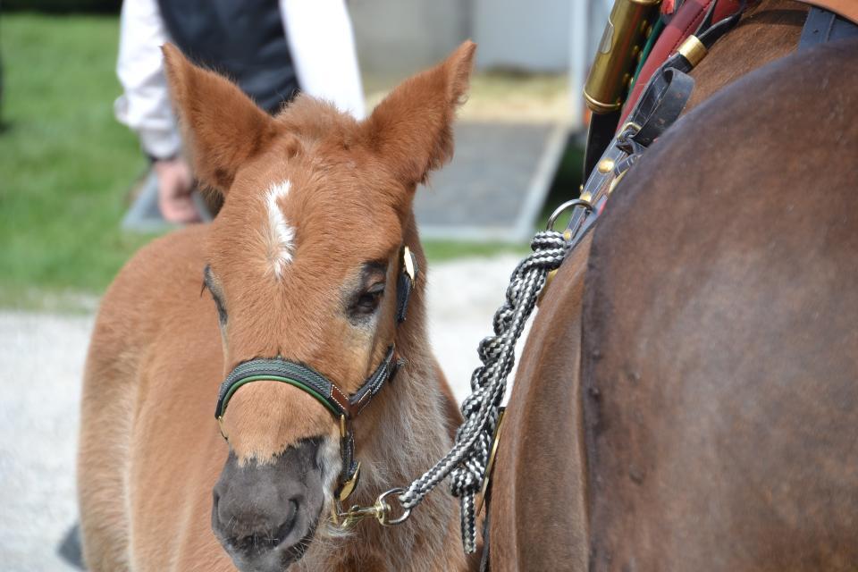 Pferdemarkt !!! ABGESAGT !!!