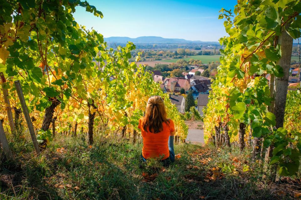 Gönn Dir! - Wochen: Bier & Wein - Genussvolle Weinbergwanderung