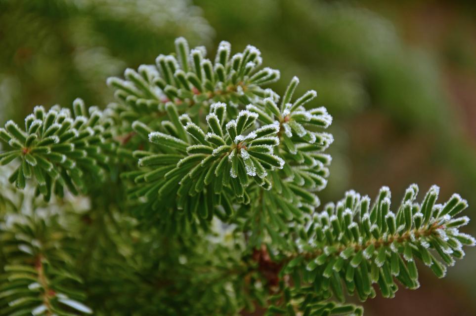 Ein Weihnachtsbaum für Wildtiere
