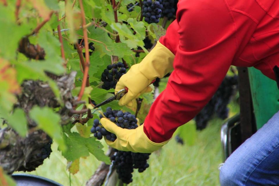 Weinbau Brech