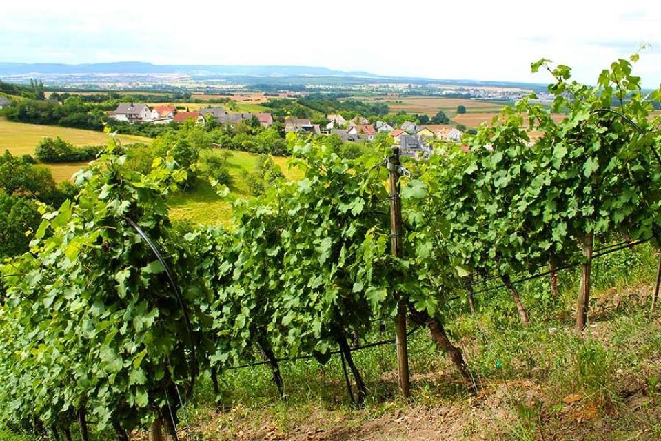 Weinbau Eller