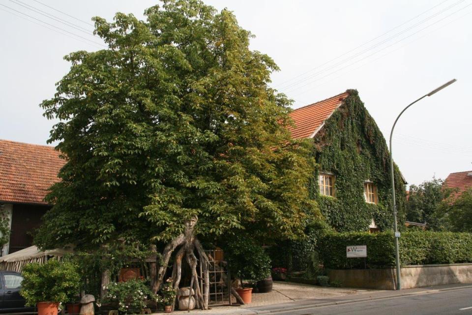 Winzerhof und Heckenwirtschaft Wagner