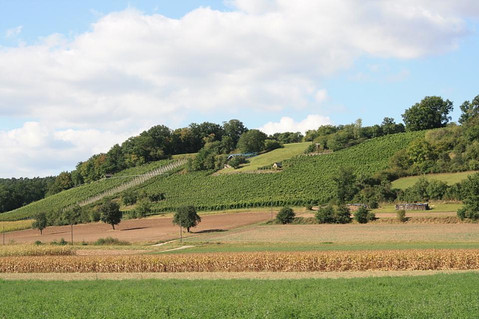 Weinbau und Gasthaus Mohl