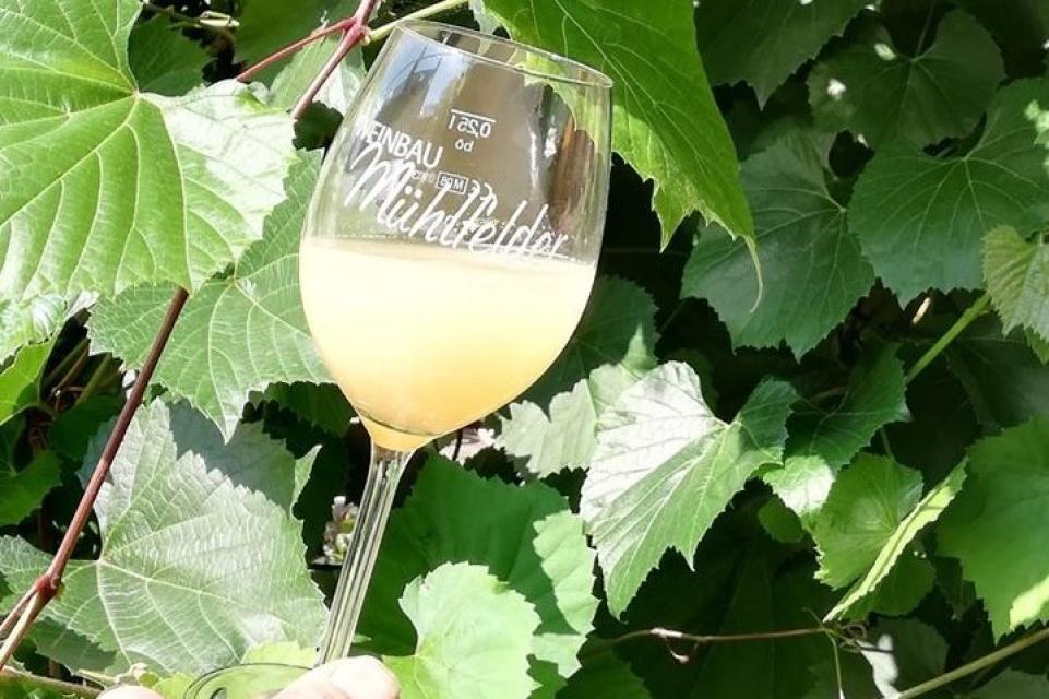 Weinbau und Heckenwirtschaft Familie Mühlfelder