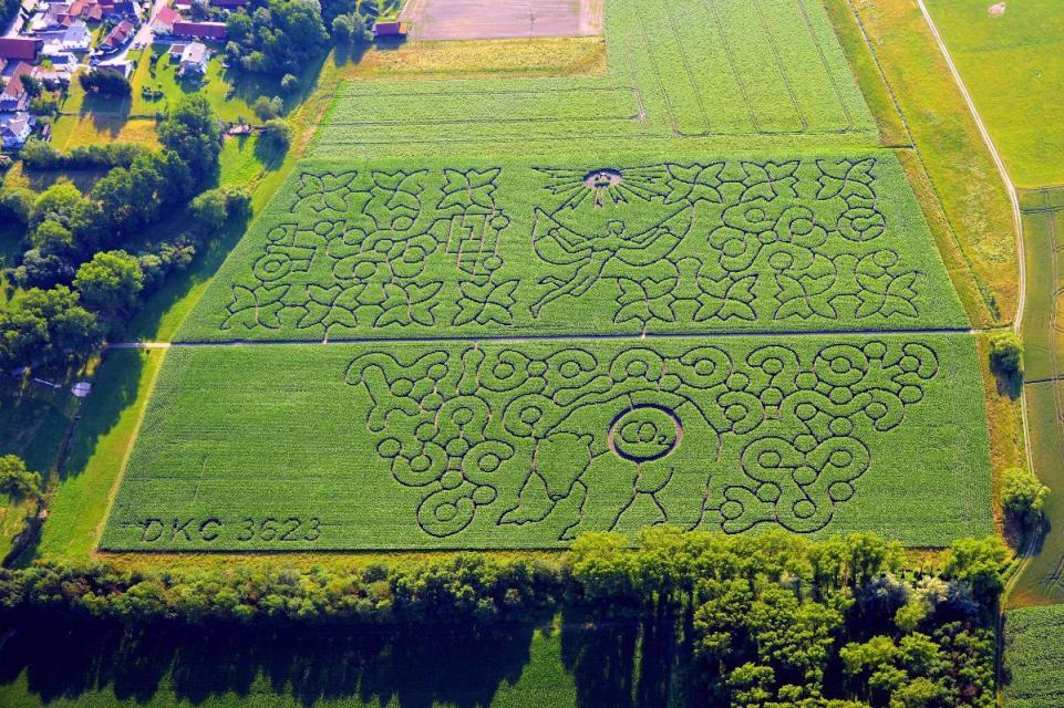 Labyrinth im Mais