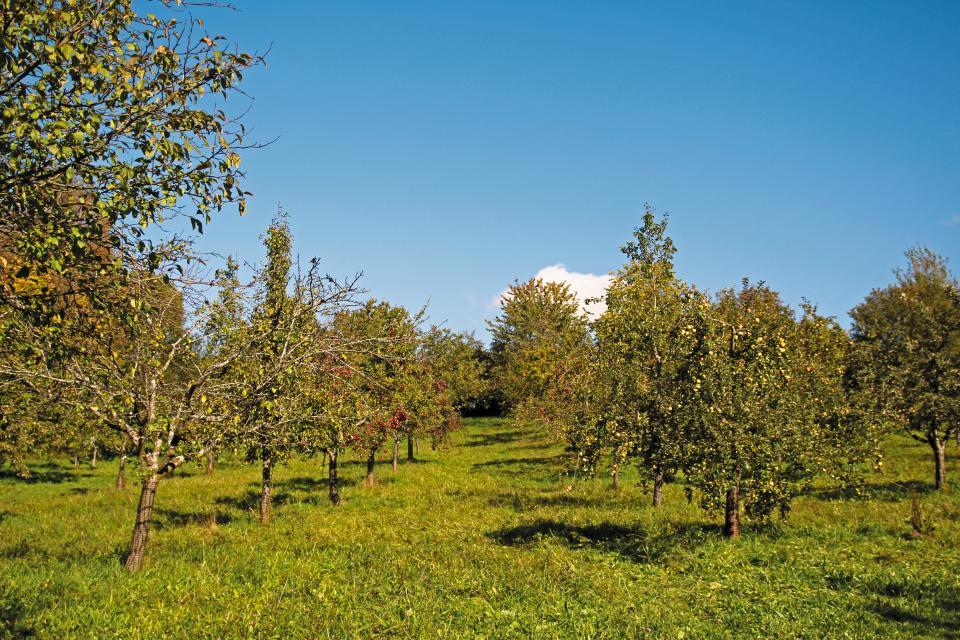 Kreisobstlehrgarten - Obstlehrpfad