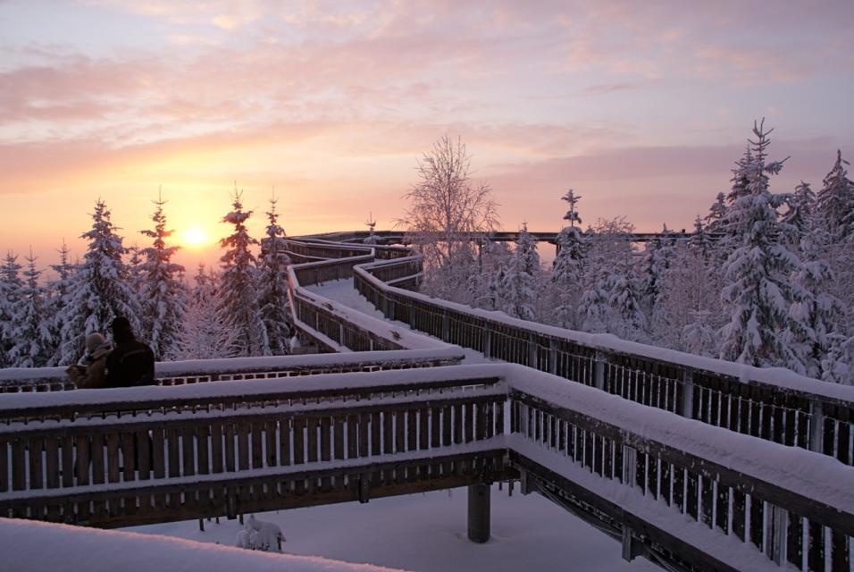 Winterzauber auf dem Waldwipfelweg