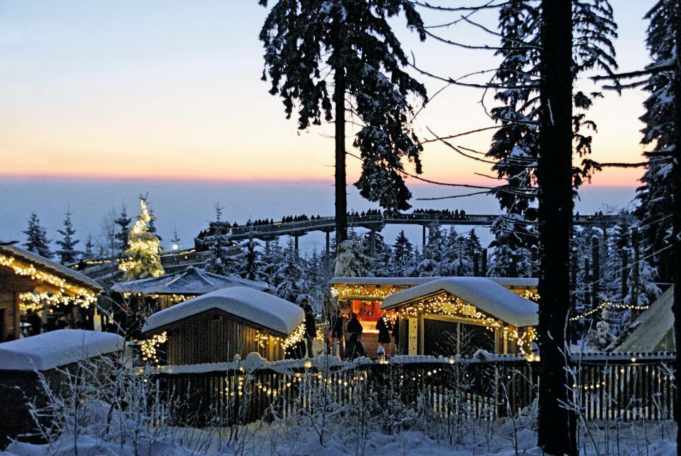 Winterstimmung & Lichterzauber auf dem Waldwipfelweg