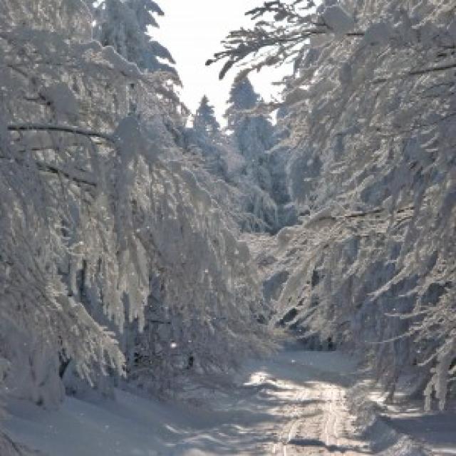 Langlauf in Schwarzach - Grandsberg -