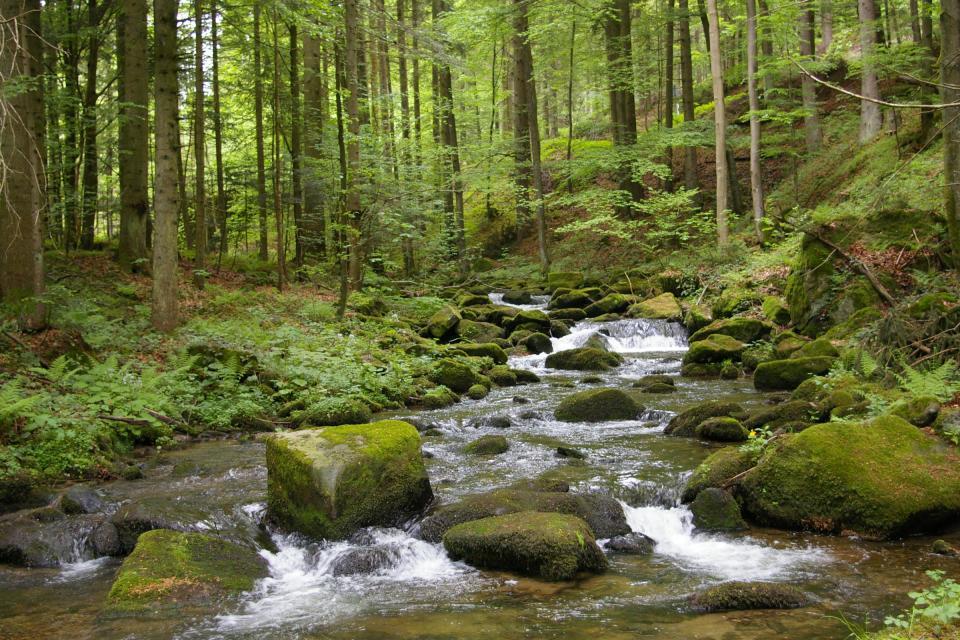 Wandern in Perasdorf