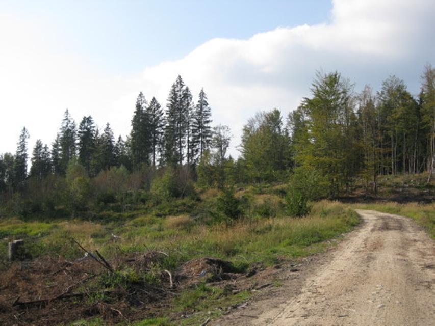 Route 3 entlang des Nationalparkes nach Wiesenfelden