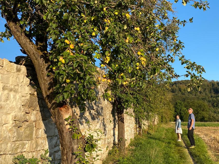 An der Klostermauer Engelthal